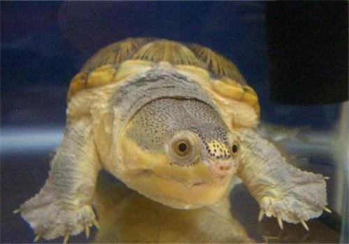 窄桥蛋龟哪里有卖