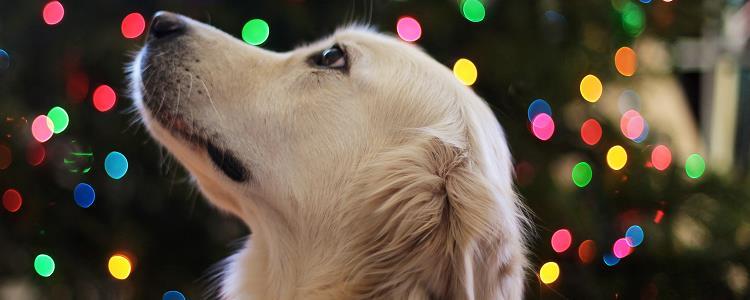 狗狗发抖没精神不吃东西是怎么回事