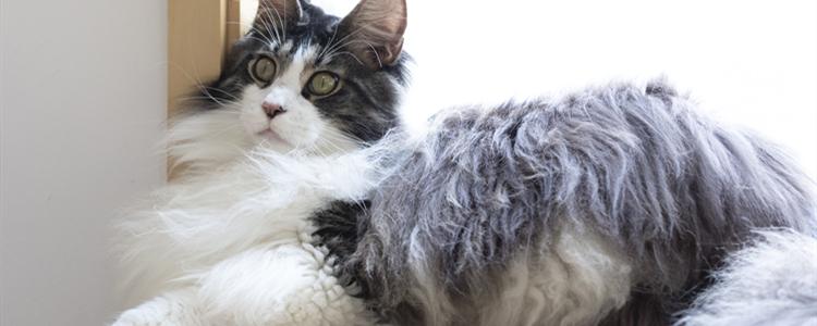 猫打完妙三多发烧正常吗