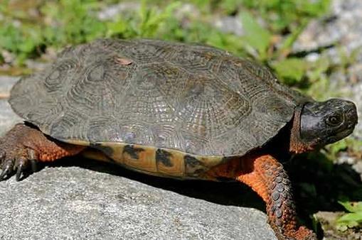 木雕水龟需要加温吗