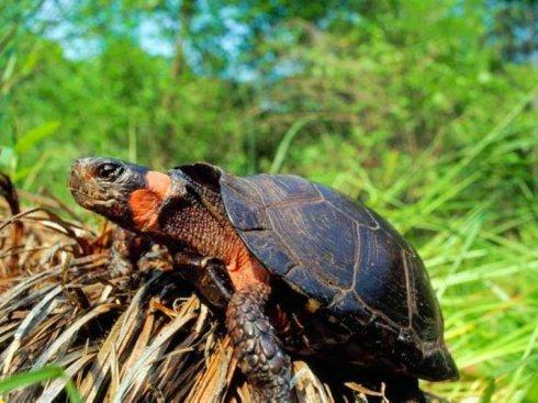 牟氏水龟的生活环境