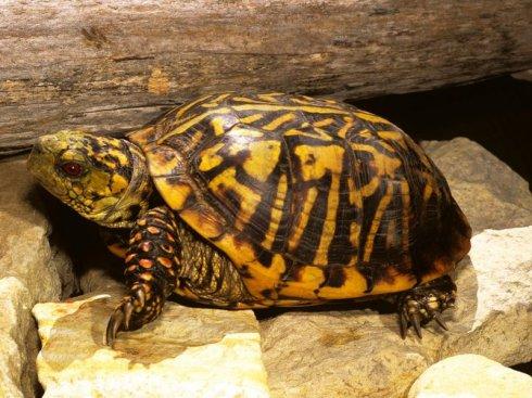 牟氏水龟饲养方法 牟氏水龟的饲养经验