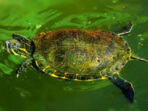 斑彩龟吃什么食物