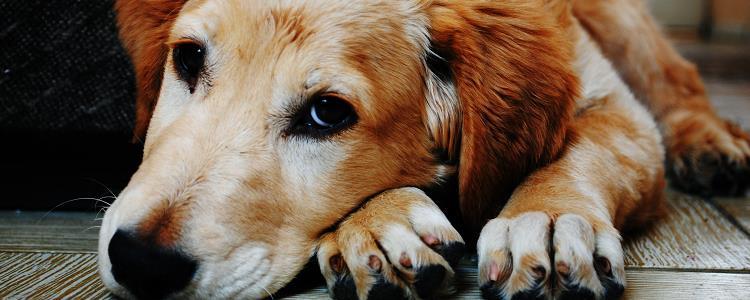 狗狗腿上秃了一块毛能自愈吗