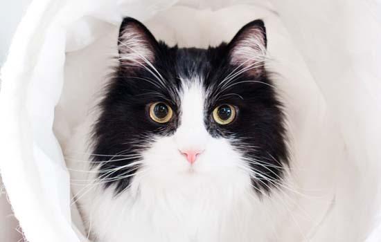 猫咪护食怎么纠正