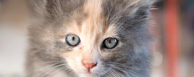 小猫掉毛怎样处理