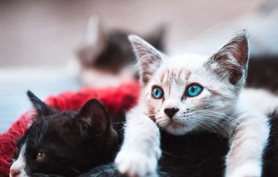 被小猫咬了一个针眼儿怎么办