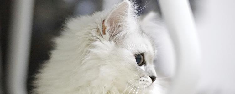 冻干猫粮和普通猫粮有什么区别
