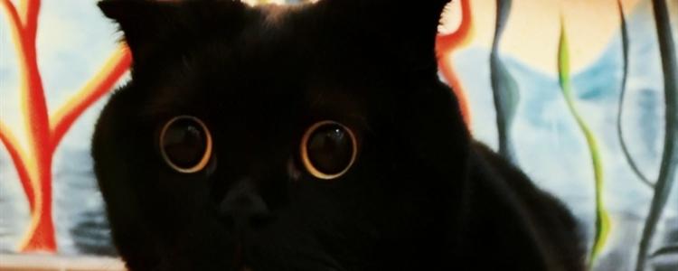 小猫脐带怎么剪