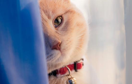 猫咪吃塑料袋是为什么插图(1)