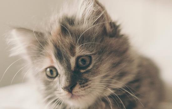猫咪呼噜呼噜是什么意思插图(1)