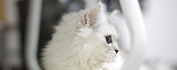 经常给猫擦眼睛会有炎症么