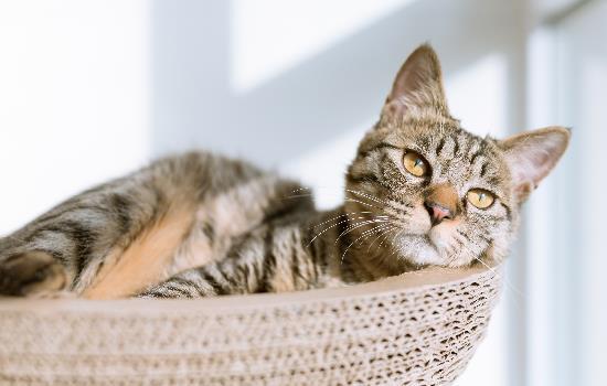 猫恶露有炎症