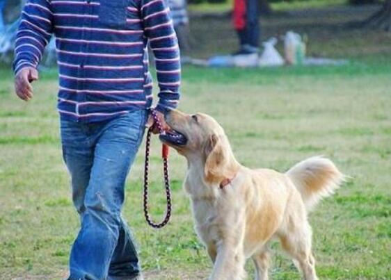 狗狗被你养熟了的五种表现,新手铲屎官必看!