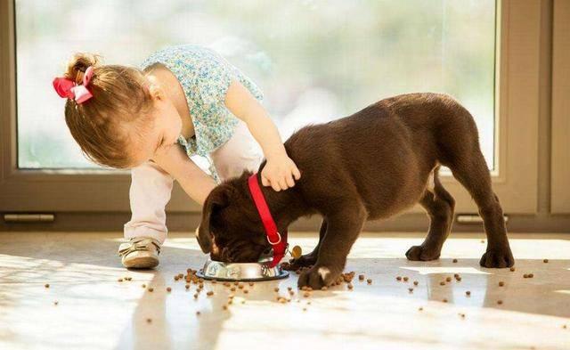 狗狗吃啥都没味道,莫非是外面有狗了?