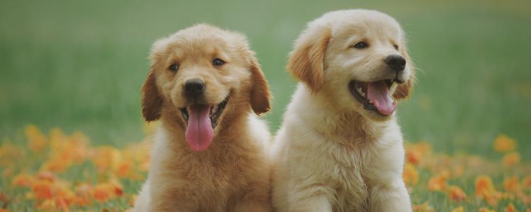 狗狗口腔肿瘤保守治疗方法