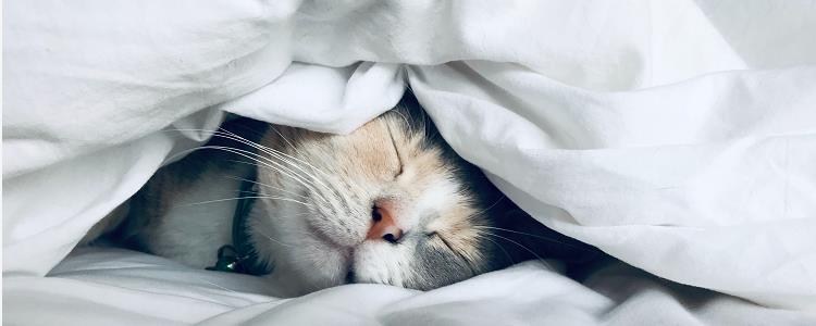 猫咪应激最多几天不吃饭