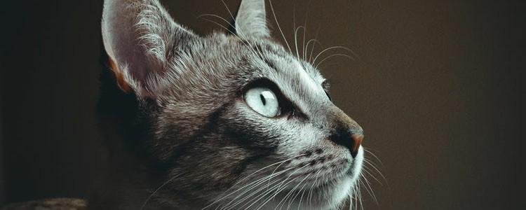 猫咪眼睛黄绿色分泌物