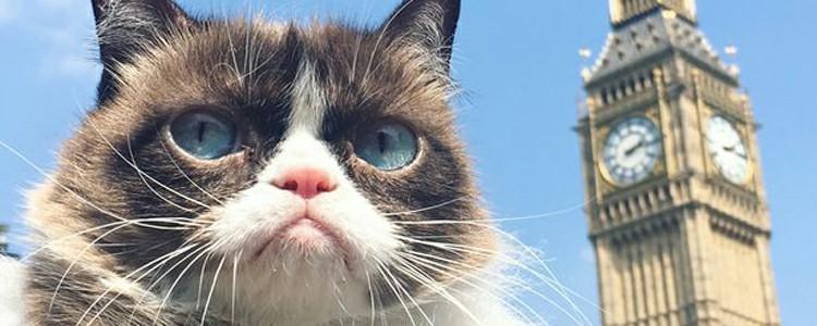 小猫脖子上有结痂