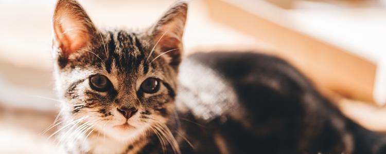 小猫肛门有点突出
