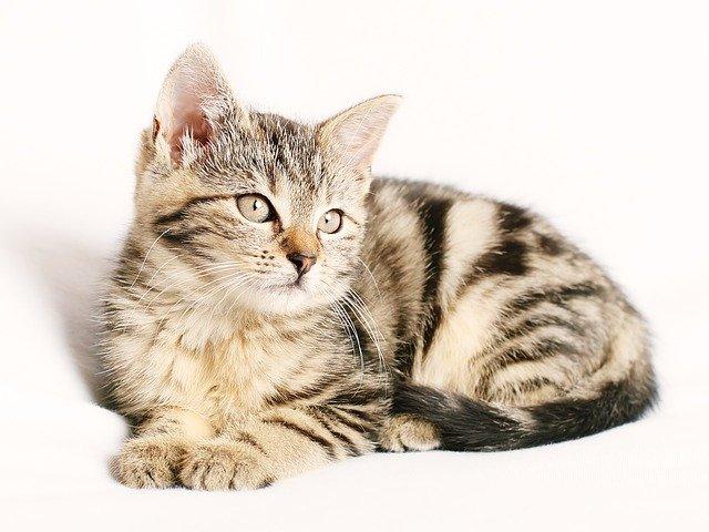 猫咪有9条命的真相是什么?
