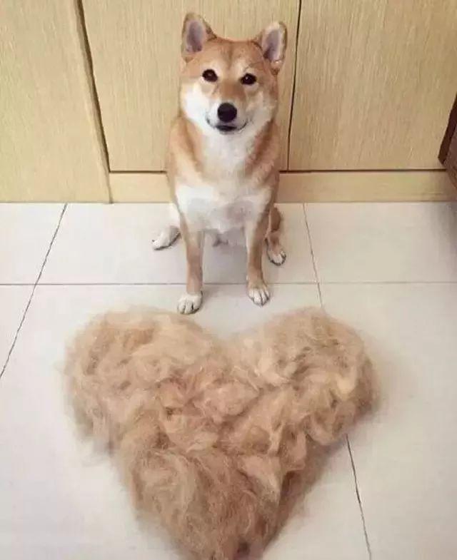 """据说养狗的人,都撒过这五个""""谎""""!"""