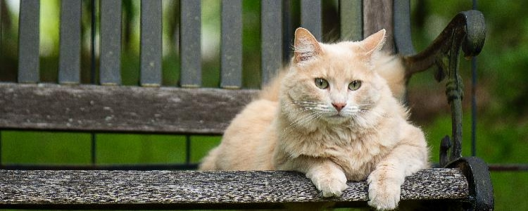 母猫产后抑郁的症状