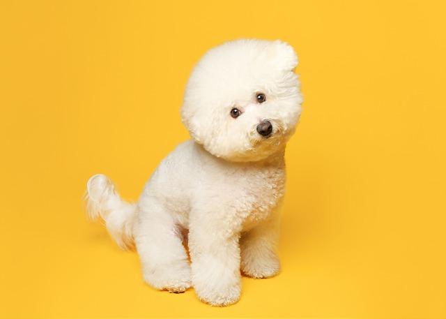 狗狗得了细小是什么症状
