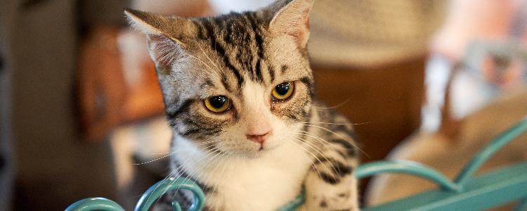 猫咪生产后不吃东西