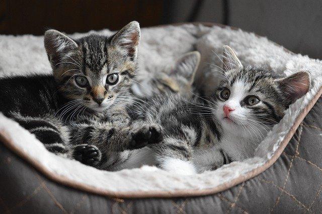 猫打架怎么办可以让他们和平相处吗