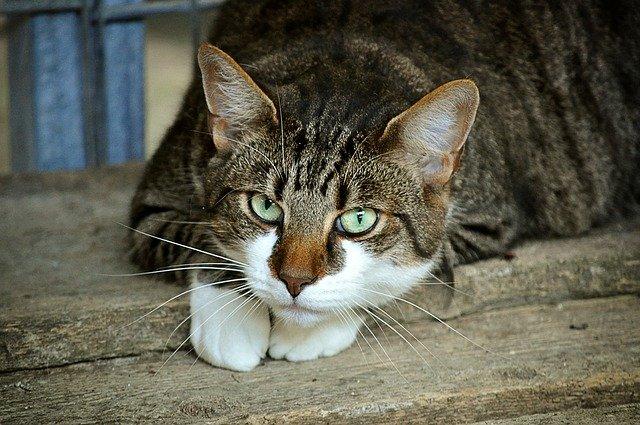 猫吃了蟑螂怎么办