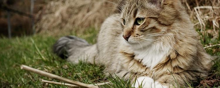 猫咪晚上很兴奋到处跑怎么办