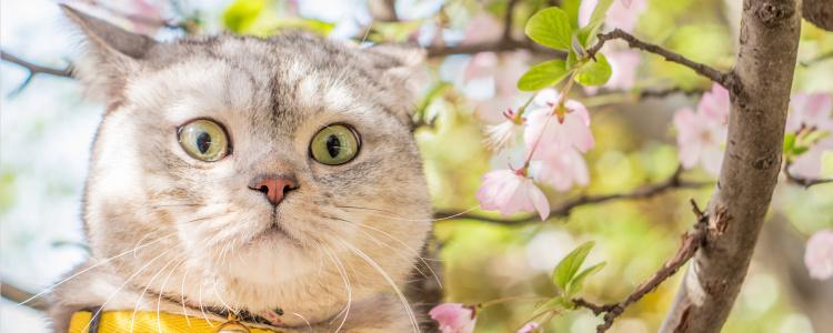猫猫多大可以打疫苗