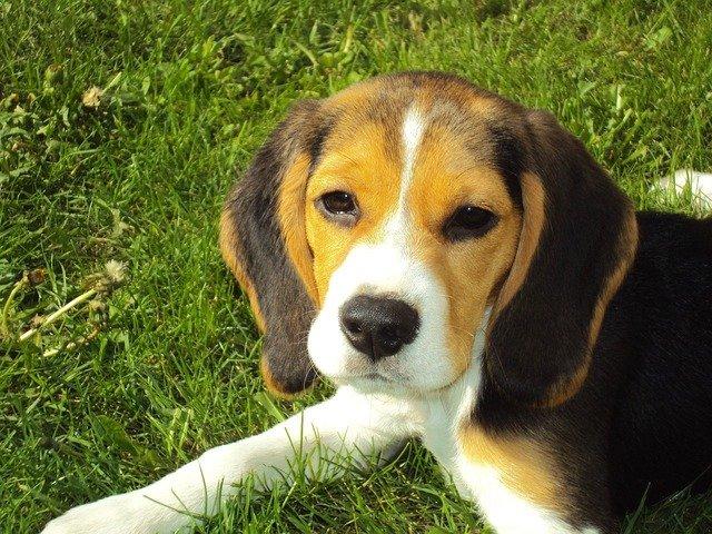狗狗夏天三天洗一次澡可以吗