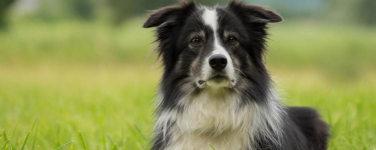 狗吐白沫是咋回事用什么办法治疗