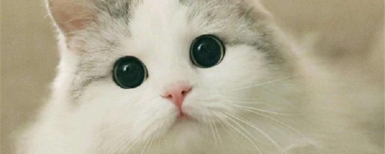 猫夏天绝育伤口容易发炎吗