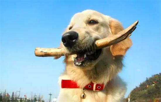 狗误食异物怎么办?