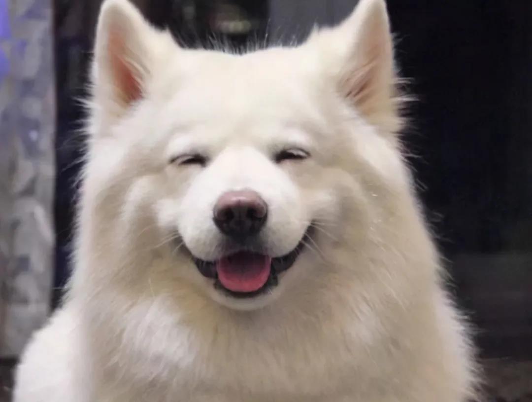 狗狗会笑吗?原来事实是这样的!