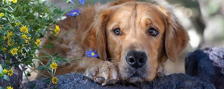狗狗身上长疙瘩用什么药