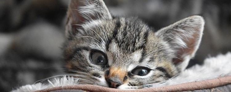 猫咪尿闭会死吗