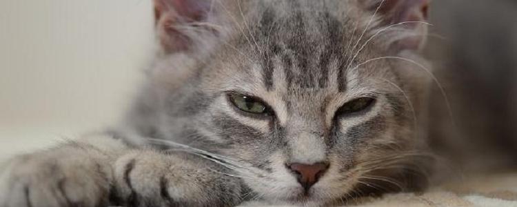 猫怀孕可以摸肚子吗