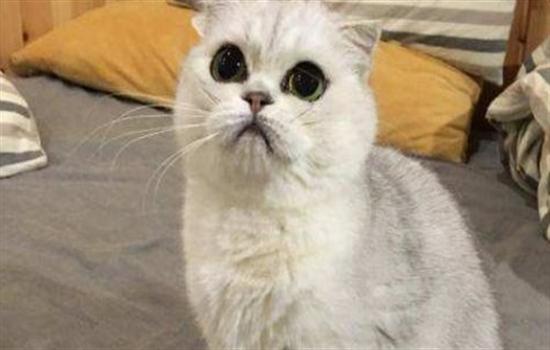 猫支鼻是怎样的