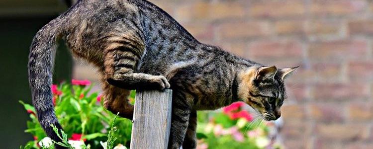 猫尿不出来怎么催尿