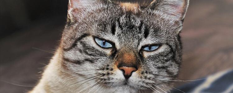 猫咪中暑不吃饭不喝水怎么办