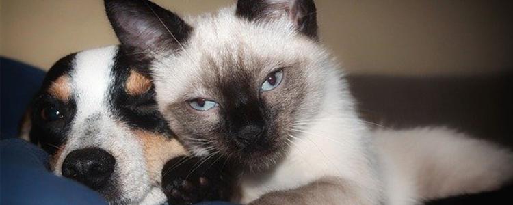 猫抑郁的原因及表现