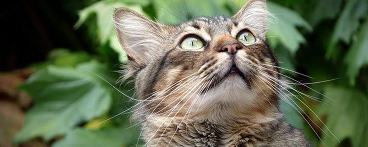 小奶猫肠炎症状及治疗