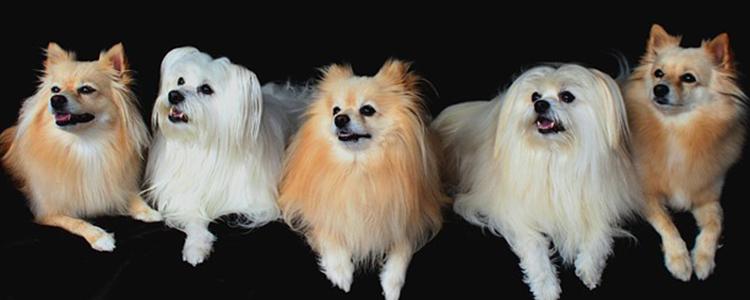 狗狗尿路感染吃什么药