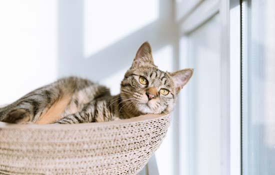 家猫中毒了吃什么解毒?