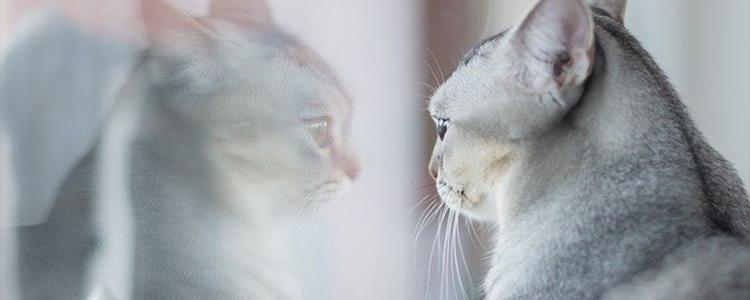 猫咪吃了体内驱虫药呕吐