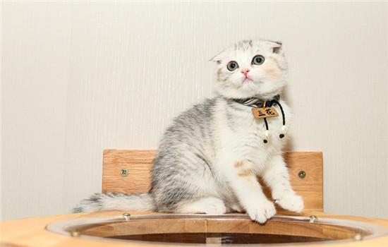 猫靠近后腿的肚子瘪怎么办